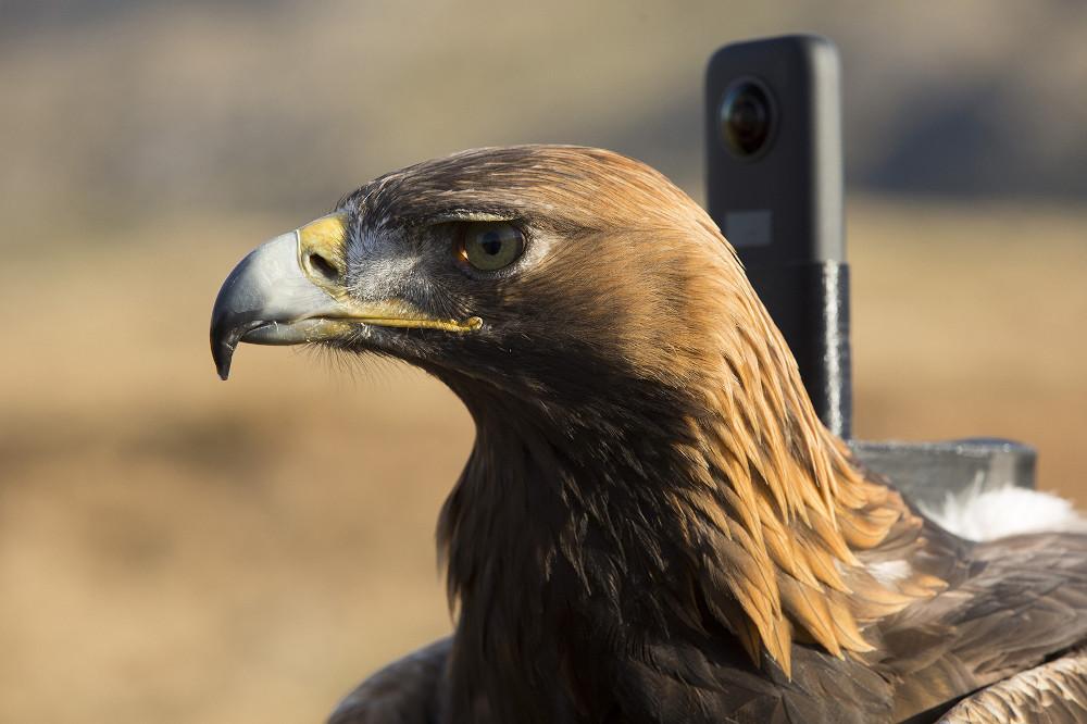 BBC eagle documentary