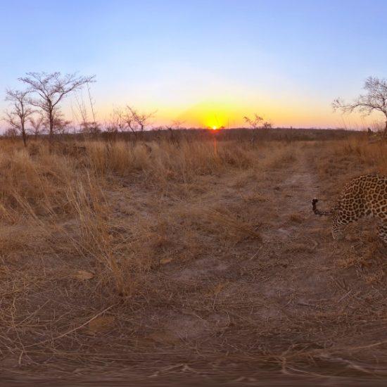 VR education leopard