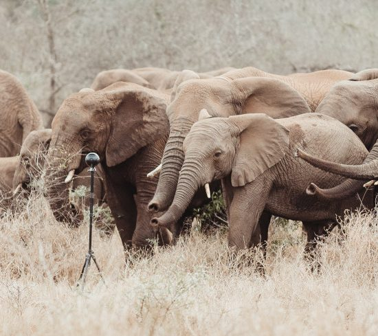 VR nature documentary elephant